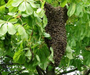 Spotkanie Koła pszczelarzy w dniu 11.06.2017r.