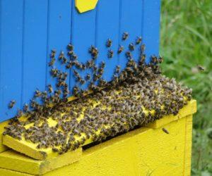 Ognisko dla członków Koła Pszczelarzy