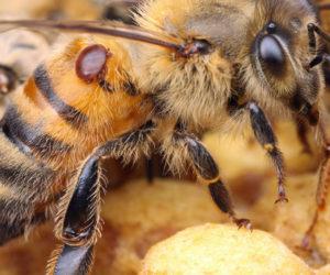 Walka z warrozą – ważny apel do pszczelarzy