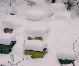 Zebranie zimowe – 20 stycznia
