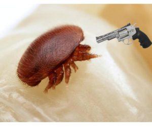 Materiały z II Konferencji Pszczelarzy, Ekologów i Leśników – strategia walki z warrozą