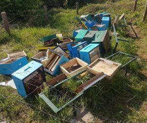 Ważna informacja dla pszczelarzy, którzy ponieśli straty w wyniku klęsk żywiołowych